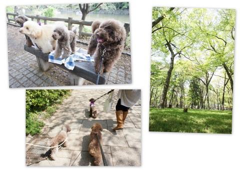 2011-04-20井の頭公園4.jpg
